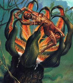 Madagascan Man-Eating Tree