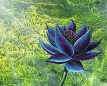 Black+Lotus