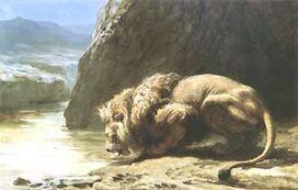 Lion-1-