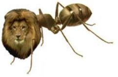 Ant Lion Myrmecolion Mermecolion Myrmecoleon Mermecoleon Formicoleon Formicaleun Lion Ant