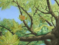 Maple-elemental-6-illustration-348