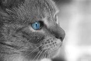 Whitetail.closeup.reallife