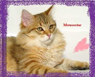 Mousestar