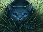 Bluestar-warrior-cats