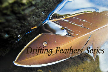 Drifting Feathers Series Pic