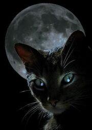 Black-cat-moon-1-