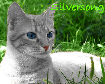 Silversong Image