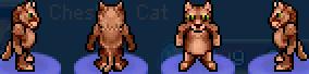 Char wild cat