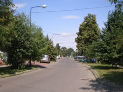 Sternicza