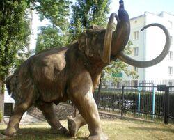 Muzeum Geologiczne mamut