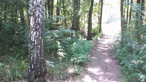Park Leśny Bródno