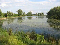 Jezioro Powsinkowskie