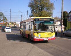 Młoda (autobus 213)