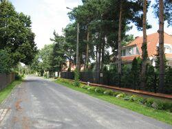 Mlawska (1)