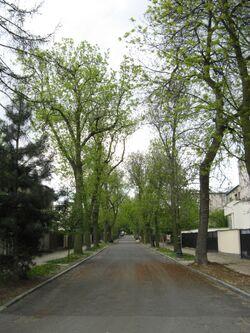 Gomolki