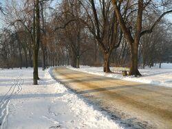 Park Skaryszewski zima