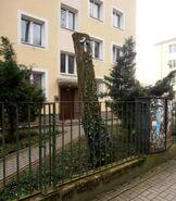 Promenada (nr 9-11, krzyż na drzewie)
