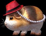 Chubby Guinea Pig