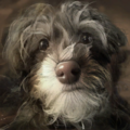 Wl2 portrait dog.png