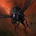 Flys.png