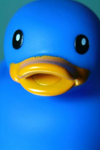 File:Duckk.jpg