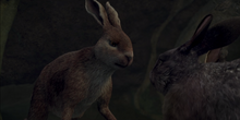 Cowslip Blocks Other Rabbits