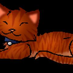 <center><small>Kittypet Version</small></center>