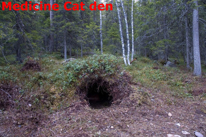 Medicine Cat den