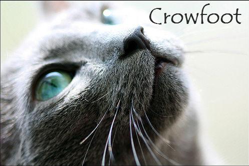 File:Crowfoot.jpg