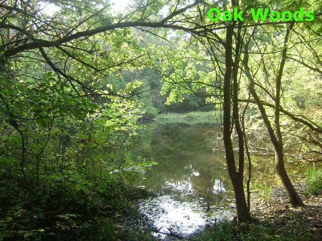 File:Oak Woods.jpg
