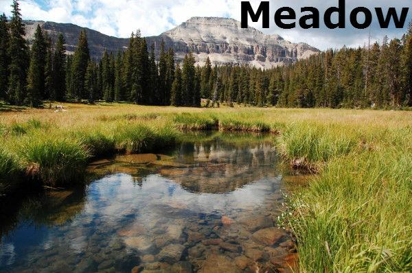 File:Meadow.jpg