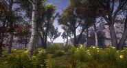 Guillaume-mardaga-tree-04