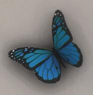 ButterflyItem