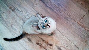 A stupid cat