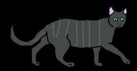 Male Shorthair Loner-1