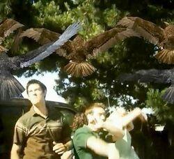 BirdemicCap2
