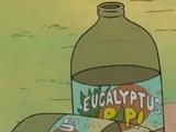 Eucalyptus Pop!