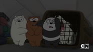 S02 Baby Bears on a Plane (22)