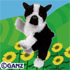 Preview Boston Terrier