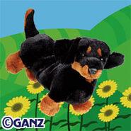 Preview dachshund