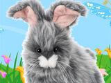 Angora Bunny
