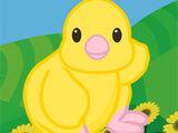 Yellow Springtime Chick