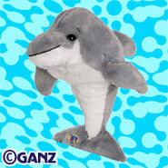 Preview bottlenose dolphin