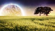 850-amazing-nature-full-hd-wallpapers-1920-x-1080-px2011-collection