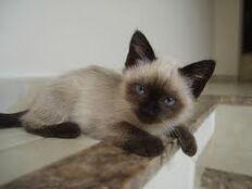 ANT Ava's Kitten 2