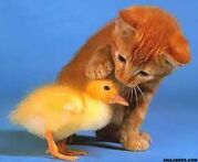 ANT AVA'S KITTEN AND DUCKLING