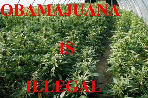 File:Obamajuana.jpg