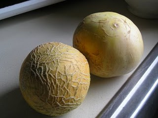 File:First two melons.jpg