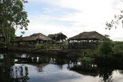 Jungle-town
