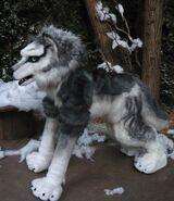 Wolf husky lily